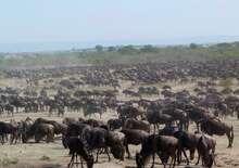 Szafari Tanzániában, zanzibári pihenéssel