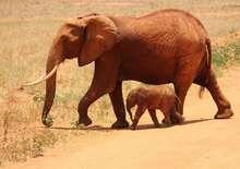 Kenya tájai és vadvilága szafari
