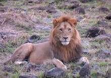 Kenya - Zanzibár